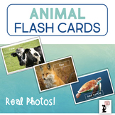Animal Flash Cards - Real Photos!