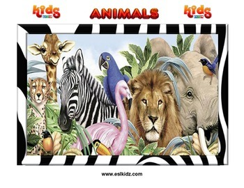 Animal Flashcard Set (80 pages)