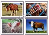 Animal Flashcards (28)