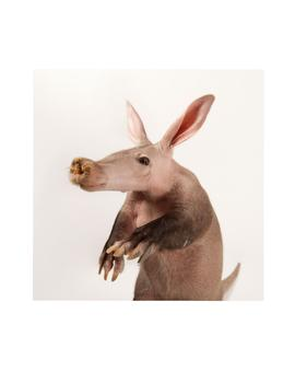 Animal Flashcards A-H