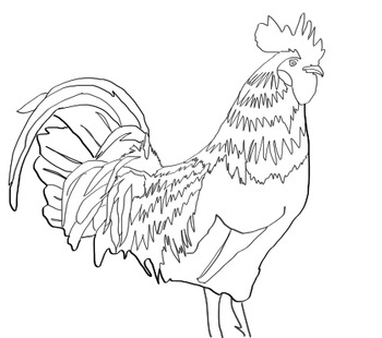 Animal Flashcards, Clipart And Coloring Pages