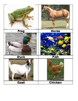 Animal Flashcards - Vocab Builder