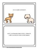 Animal Food Chain Worksheets