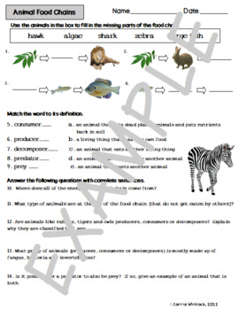 Animal Food Chains Activity Sheet by Carrie Whitlock   TpT