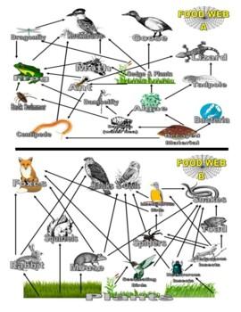 Animal Food Webs (Food Chains)