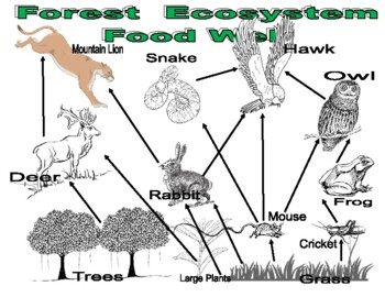 Animal Forest Foodweb Diagram