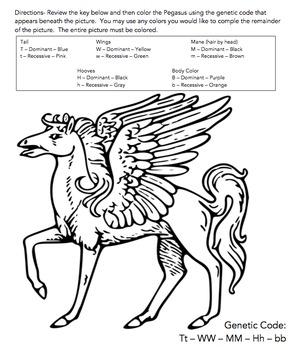 Animal Genetics Worksheet (Genotype & Phenotype Practice)