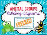 Animal Group Characteristics Labeling Diagrams FREEBIE!