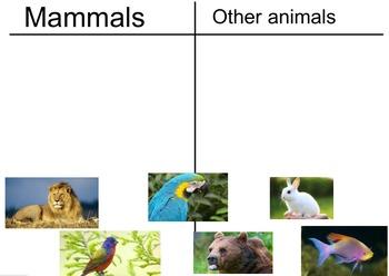 Animal Group Slides