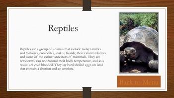 Animal Groupings PDF eBook