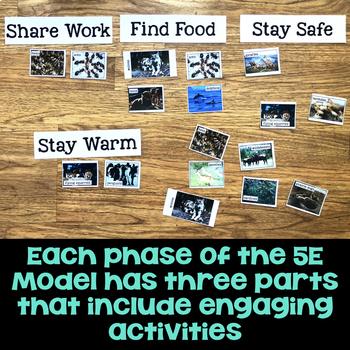 Animal Groups 5E Unit Plan for Third Grade
