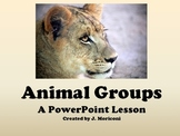 Animal Groups- A PowerPoint Lesson