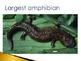 Animal Groups - Amphibians