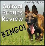 Animals Groups Review Bingo