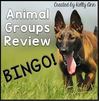 Animals Groups Review Bingo