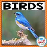 Animal Groups and Animal Classification : Birds