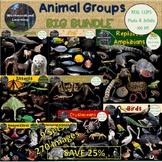 Animal Groups Clip Art 9 Set Big Bundle Photo & Artistic D