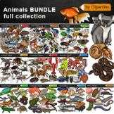 Animal Groups Clip Art Bundle