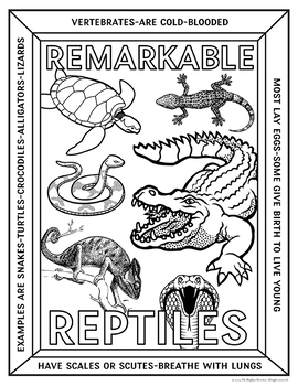 Animal Groups Coloring Pages