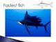 Animal Groups - Fish