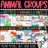 Animal Groups -Insects, Reptiles, Amphibians, Fish, Birds, & Mammals