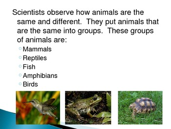Animal Groups - Mammals