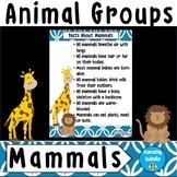 Animal Groups - Mammals - Poster