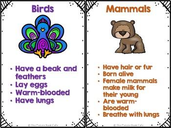 Animal Groups-Mini Posters