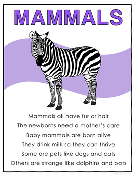 Animal Groups Posters
