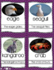 Animal Groups (Posters, Flashcards, & Activities)