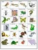 Animal Groups Quiz