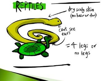 Animal Groups - Reptiles