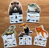 Animal Groups Sorting Mats (w/Real Photos)