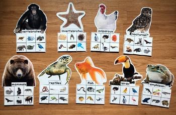 Animal Groups Sorting Mats (w/Real Photos)