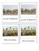 Animal Groups of Africa (3 Part Montessori Cads)