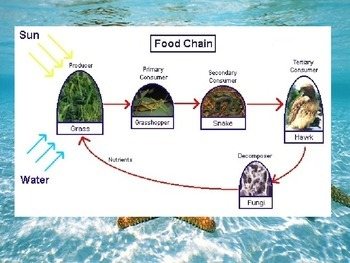 Animal Growth and Adaptations