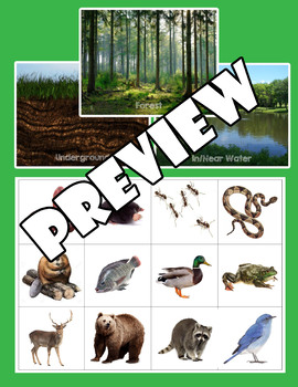Animal Habitat Card Sorting Game - Forest, Underground & In/Near Water Habitats
