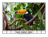Animal Habitat Puzzles and Posters