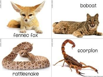 Animal Habitats Bulletin Board