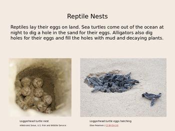 Animal Habitats - Nests PowerPoint