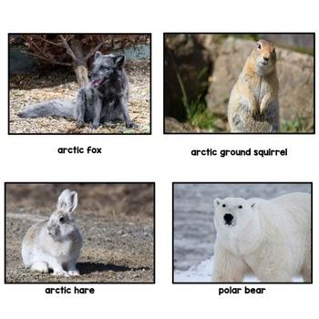 Animal Habitats- The Arctic Tundra