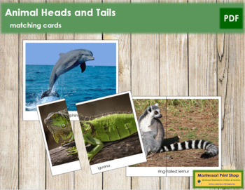 Animal Heads and Tails