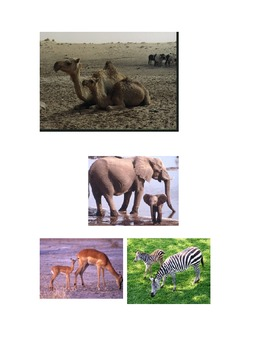 Animal Heredity Activity Chart with Mother and Baby Animal Photos