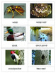Animal Homes: Three Part Cards  and  Mini Matching Cards