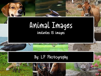 Animal Images  Personal & Commercial Use