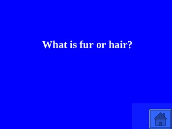 Animal Jeopardy