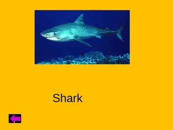 Animal Jeopardy - Powerpoint Interactive smartboard lesson
