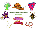 Animal Kindgom - Invertebrate bundle!