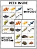 Vocabulary Pocket Chart - Animal Kingdom