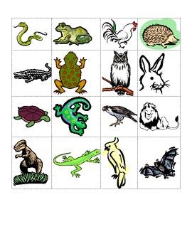 Animal Kingdom Bingo
